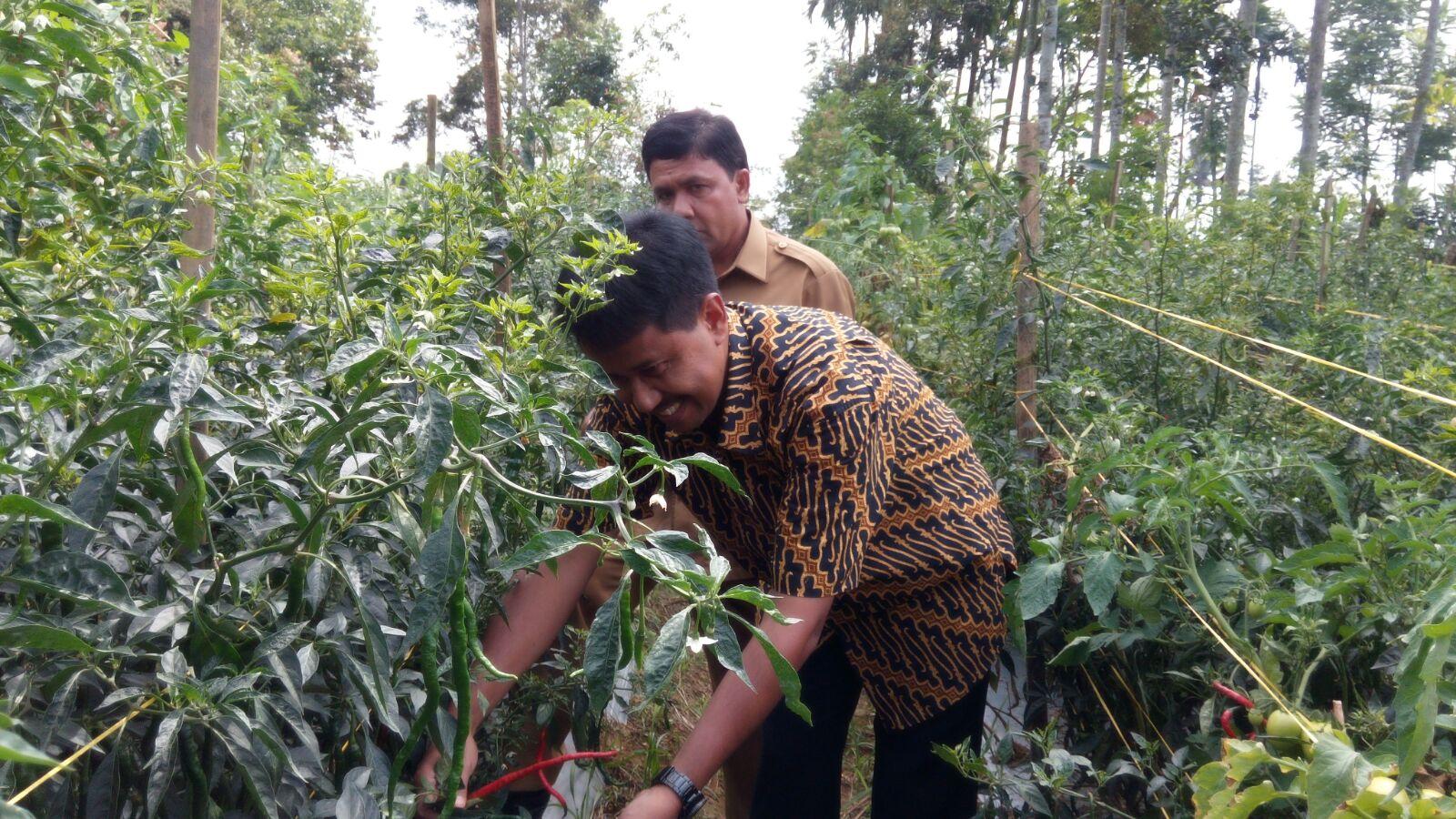 Diperta dan BI Kembangkan Cluster Hortikultura