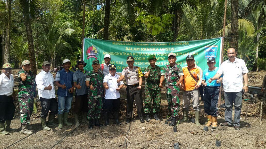 Pengembangan Jagung di Kepulauan Mentawai