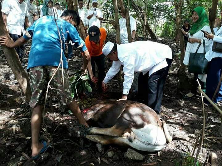 Wagub Nasrul Abit Sembelih Sapi Qurban Yayasan Rohana Khudus