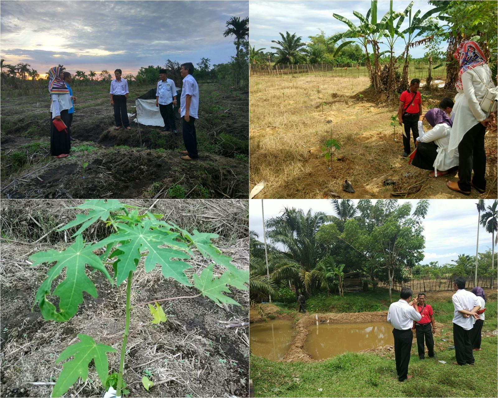 Monitoring dan Evaluasi ke Lokasi Nagari Mandiri Pangan Kab. Pesisir Selatan