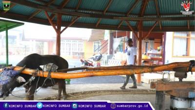 Manggilang Tabu, Pengolahan Tebu Secara Tradisional di Nagari Lawang