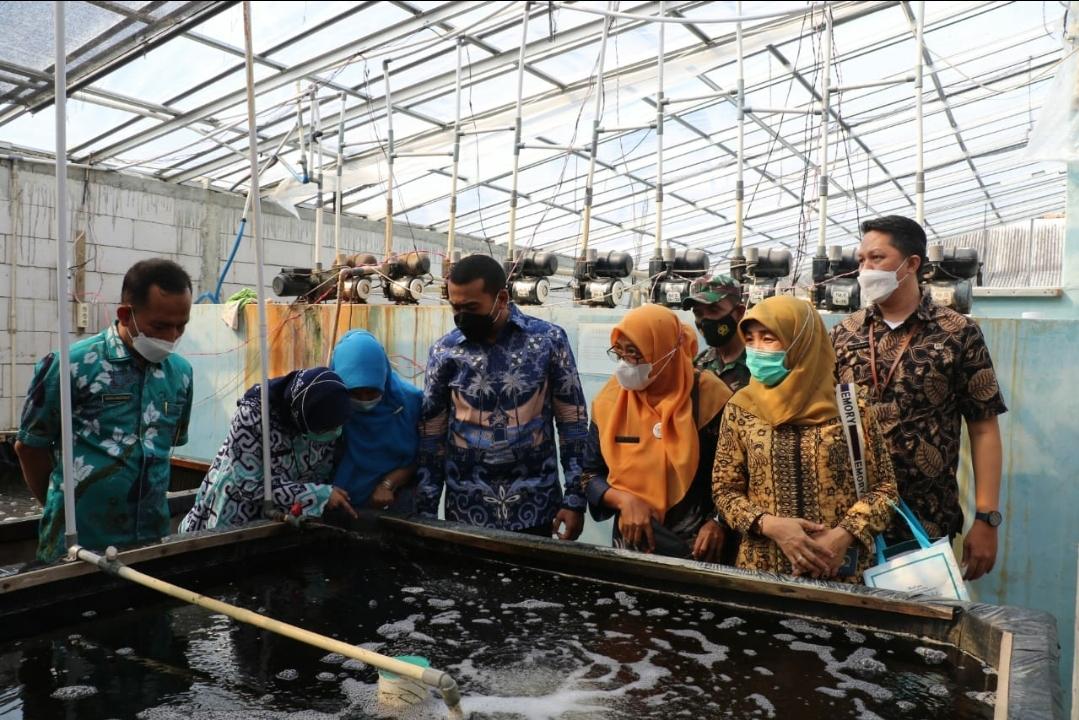 Bernilai Ekonomis Tinggi, Wagub Audy Ingin Budidaya Ikan Sidat Dikembangkan di Sumbar