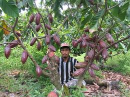 Nilai Tukar Petani Perkebunan Rakyat (NTPR) Provinsi Sumatera Barat